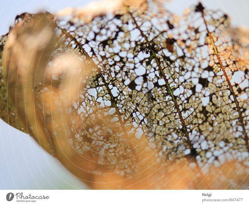 Auslaufmodell | das wars... Natur blau alt Pflanze Blatt Umwelt Leben Senior Herbst natürlich grau außergewöhnlich Stimmung braun Park authentisch
