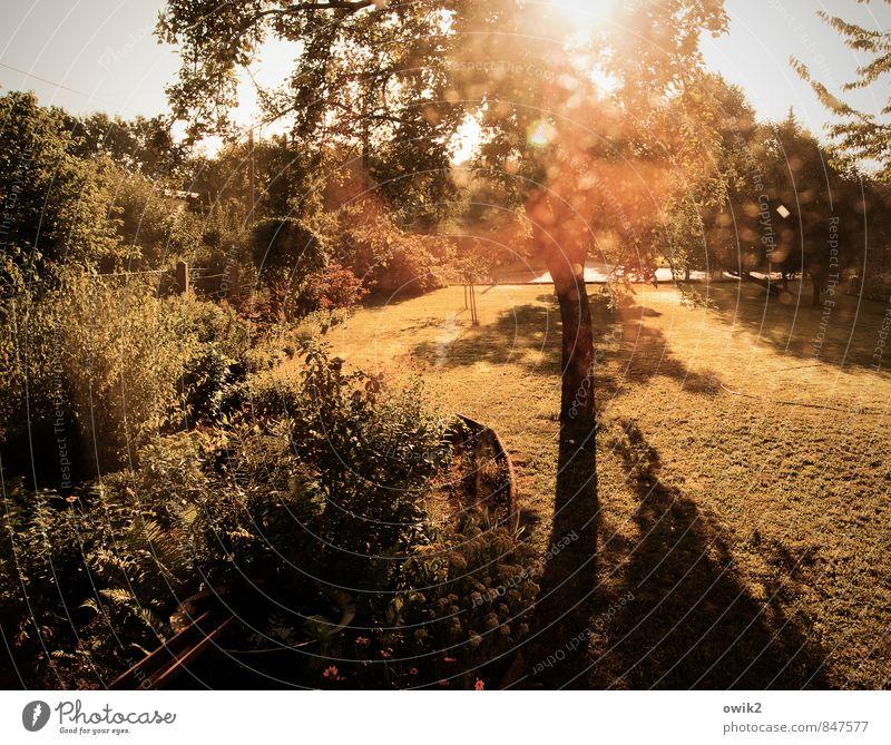 Draußen im Garten Umwelt Natur Landschaft Pflanze Wolkenloser Himmel Klima Wetter Schönes Wetter Baum Blume Gras Sträucher Grünpflanze Nutzpflanze Ast