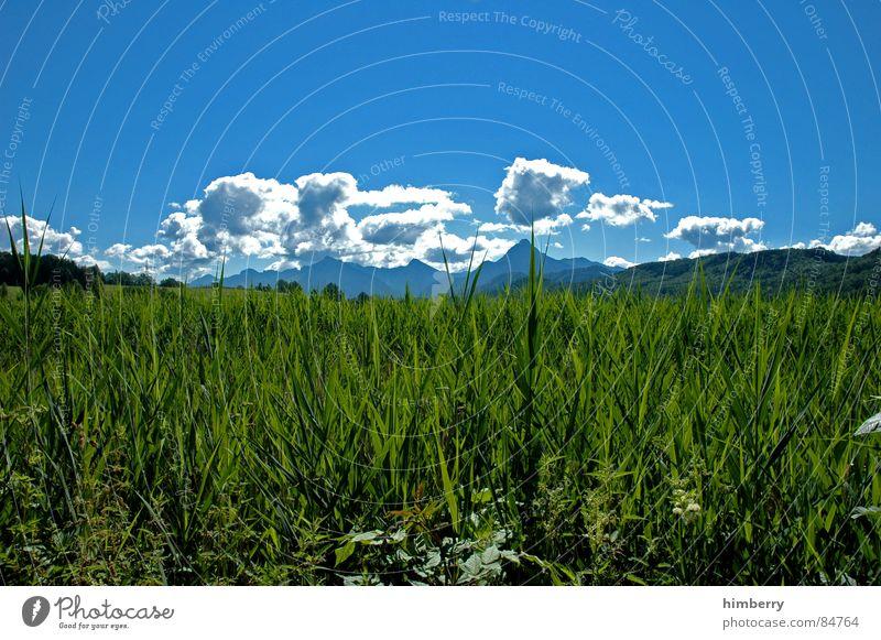 riviera royal II Gras Sommer Naturgesetz Wiese grün Umwelt Wolken Wildnis Himmel Grünfläche Berge u. Gebirge Landschaft Pflanze Firmament