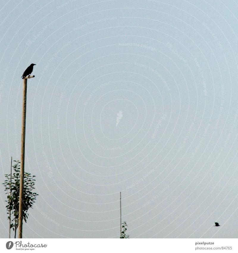 abschied Himmel Baum grün Blatt Denken Luft Linie Raum Vogel wandern fliegen sitzen Trauer Kommunizieren Aussicht