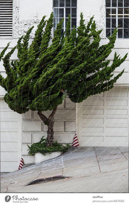 stürmische Zeiten Baum außergewöhnlich Fassade Wind Urelemente Leidenschaft Stadtzentrum San Francisco