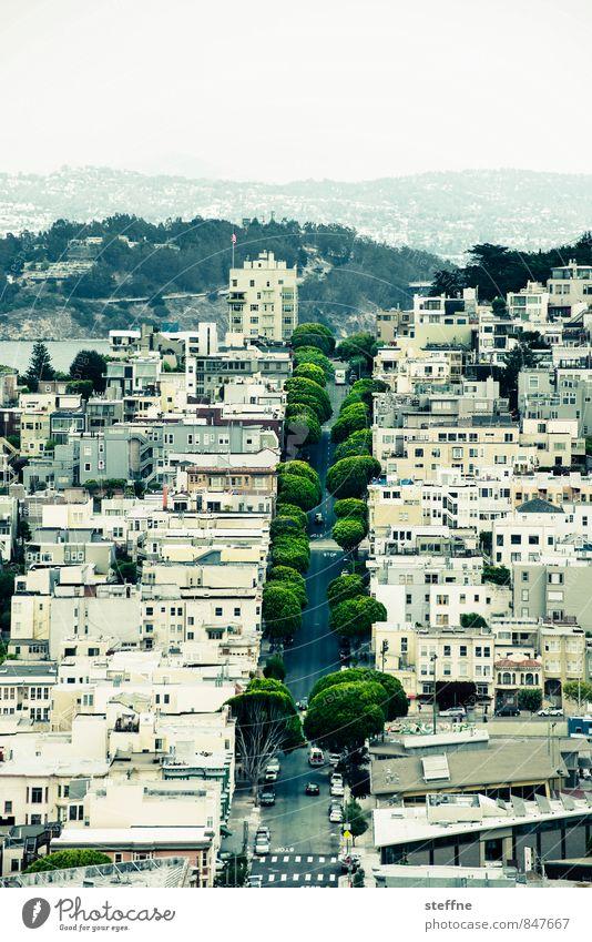 Grünstreifen Baum Hügel San Francisco Kalifornien USA Stadt Haus Straße schön Allee Farbfoto Außenaufnahme Vogelperspektive Panorama (Aussicht)