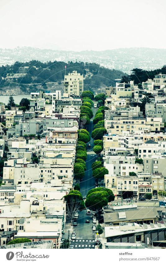 Grünstreifen Stadt schön Baum Haus Straße Hügel USA Allee Kalifornien San Francisco