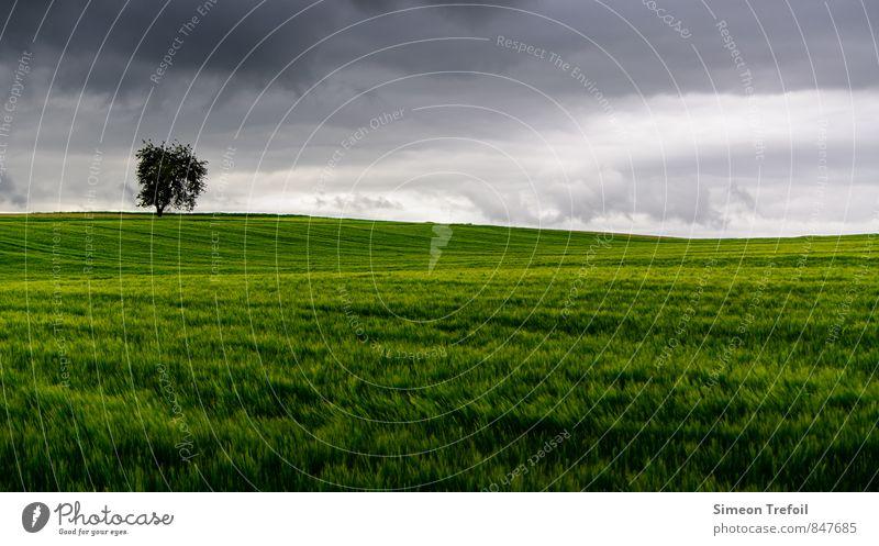 Sturm Abenteuer Ferne Umwelt Landschaft Gewitterwolken Sommer Klima schlechtes Wetter Unwetter Wind Regen Gras Feld rennen Bewegung Wachstum bedrohlich dunkel