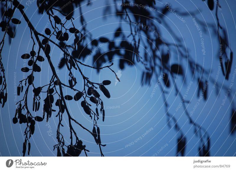 Winterblau II Pflanze Sträucher fein Pflanzenteile Botanik ruhig kalt schön Himmel Zweig Strukturen & Formen