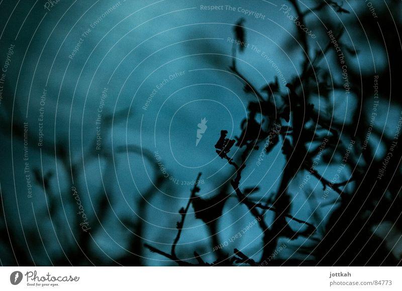 blaues Gestrüpp Natur Baum Blatt dunkel Herbst Tod Ast Zweig