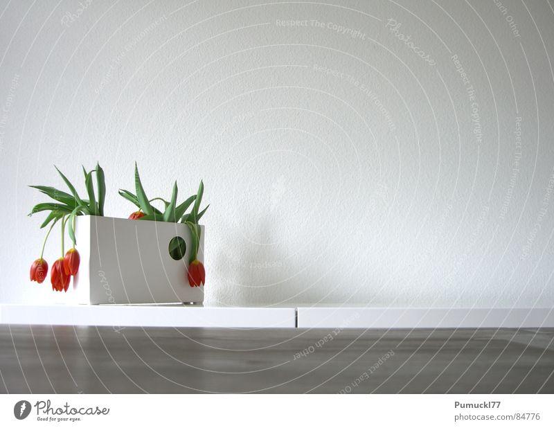 Kraftlos Blume Vase Tulpe rot braun Holz Tisch Wand hängend flau Keramik trocken schlaff Schwäche Trauer Dekoration & Verzierung Verzweiflung auf dem Trockenen