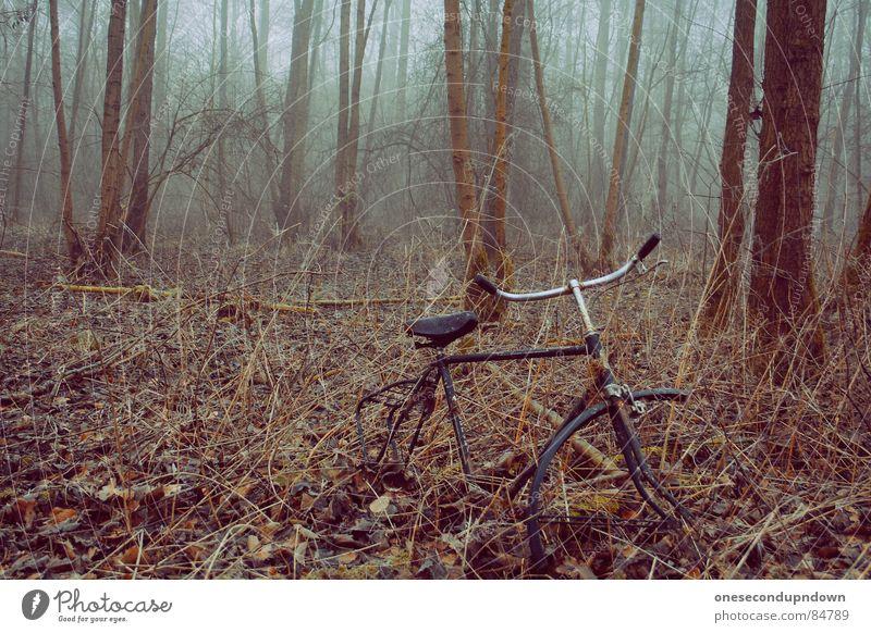 abandoned part I dunkel Nebel gruselig leer Baum kalt grau Dezember abgelegen Winter fremd außergewöhnlich herzlos Schleier geisterhaft Eis unheimlich grausam