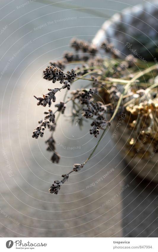 Koerbchen I Natur Ferien & Urlaub & Reisen Pflanze schön Sommer Meer Erholung Blume ruhig Gesunde Ernährung Leben Blüte Gesundheit Gesundheitswesen Idylle