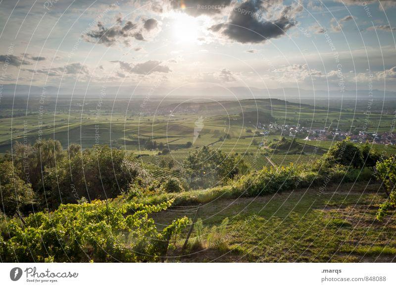 Weinland Tourismus Ausflug Umwelt Natur Landschaft Himmel Wolken Horizont Sommer Schönes Wetter Pflanze Feld Hügel Weinberg Weinbau Erholung Idylle Kaiserstuhl