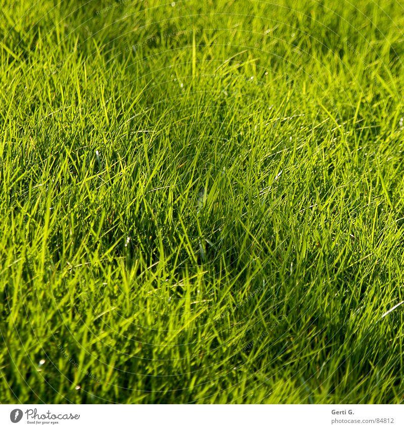 Strich durch die Rechnung grün Sommer Wiese Gras Linie Feld Wind frisch Rasen Quadrat Landwirtschaft Ernte Weide Halm saftig Versteck
