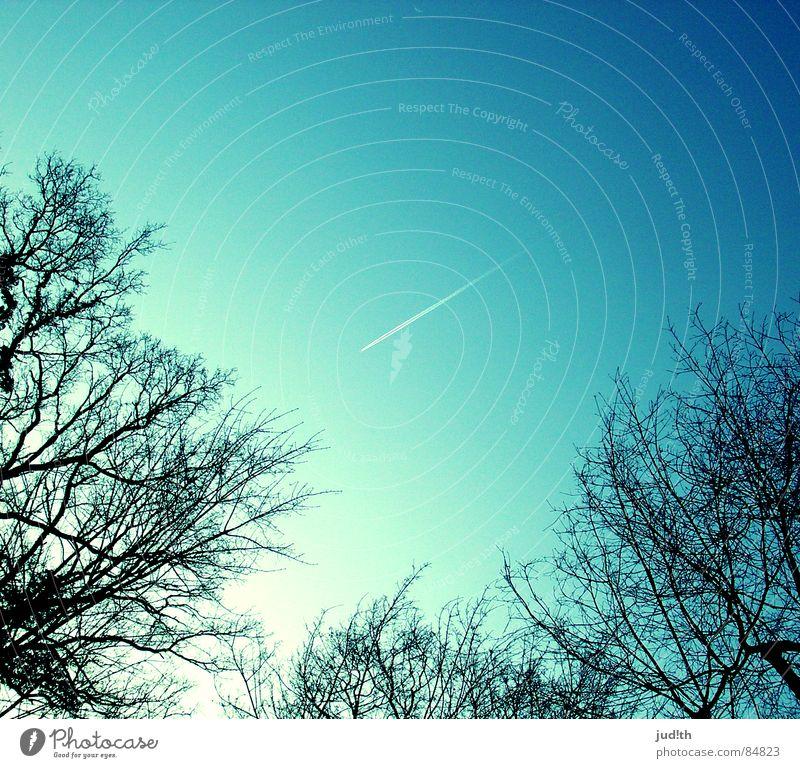 take me away Himmel weiß Baum Sonne blau Ferien & Urlaub & Reisen schwarz Linie Flugzeug Luftverkehr Ast Streifen Sehnsucht Kondensstreifen