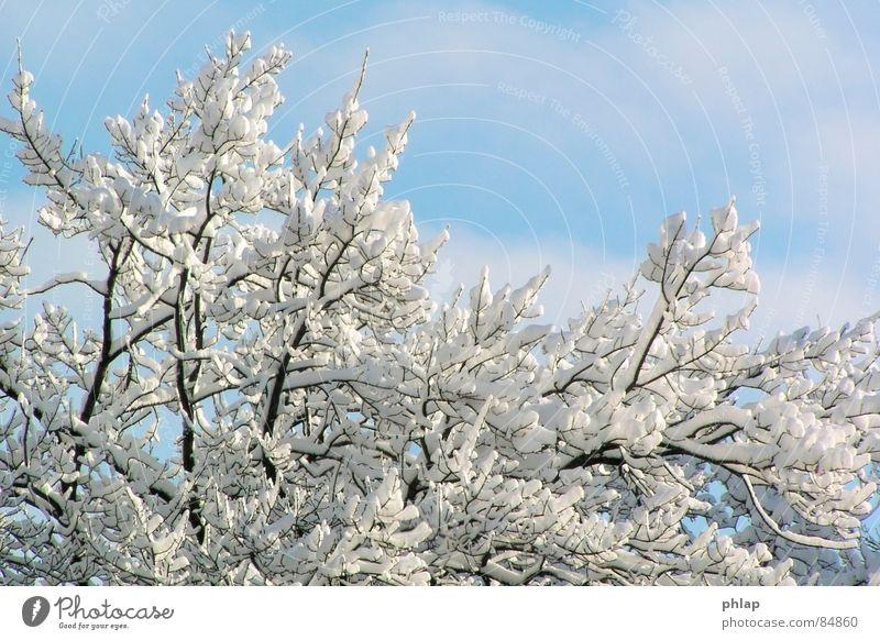 Ein Märchen aus alter Zeit Natur schön Himmel Winter kalt Schnee Eis Wetter Umwelt frisch authentisch Klima natürlich wirklich Januar lichtvoll