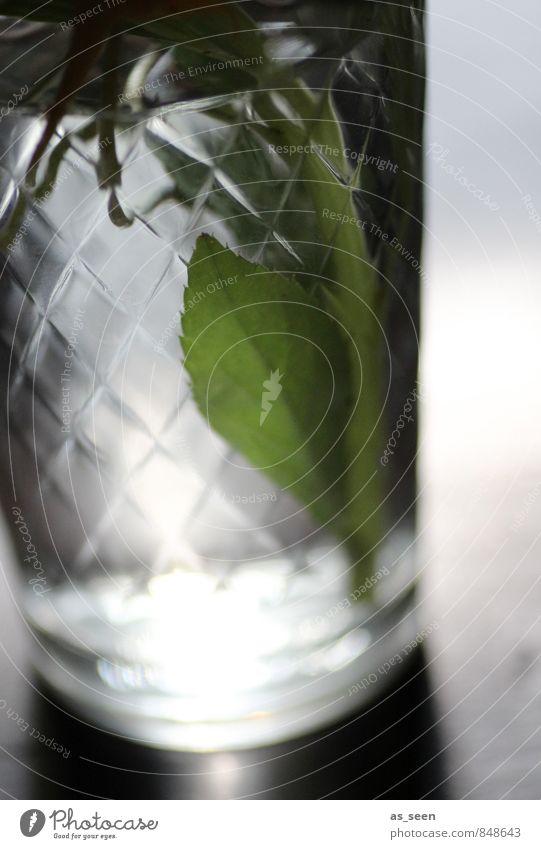 Licht im Glas Getränk Wellness harmonisch Sinnesorgane Pflanze Wasser Blatt berühren glänzend leuchten ästhetisch frisch grün weiß ruhig Schliff Blumenstrauß
