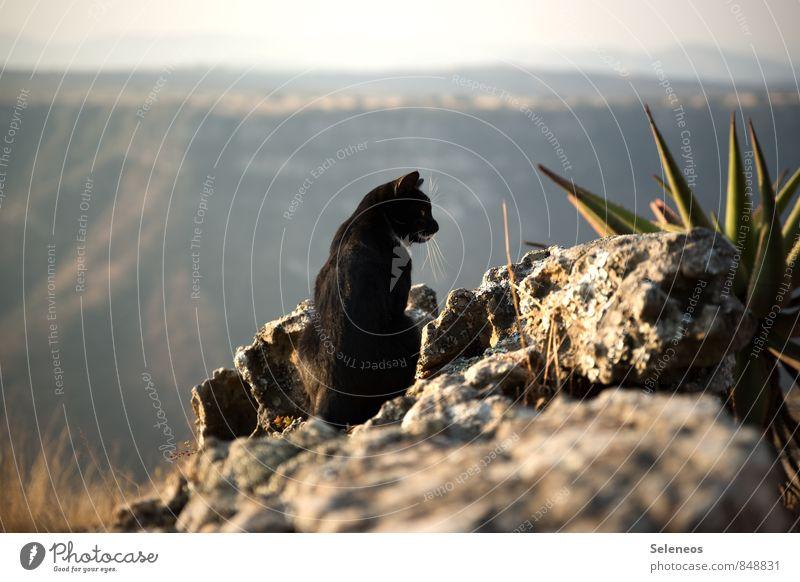 Relax Katze Natur Pflanze Erholung Landschaft Tier Umwelt Berge u. Gebirge natürlich Felsen Horizont beobachten Schönes Wetter Hügel Haustier Schlucht