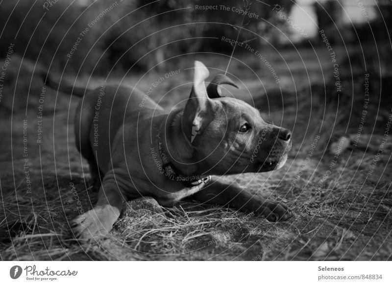 wirf Stöckchen Hund Tier Tierjunges Wiese Spielen Ausflug Abenteuer Tiergesicht Haustier Tierliebe