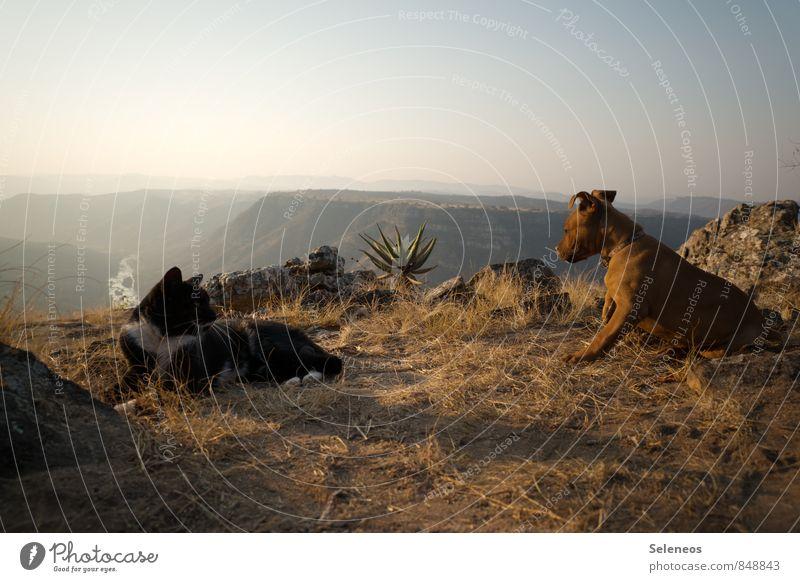 du kommst mir jetzt aber nich zu nahe Katze Hund Himmel Natur Ferien & Urlaub & Reisen Sommer Landschaft Tier Ferne Umwelt Berge u. Gebirge Freiheit Felsen