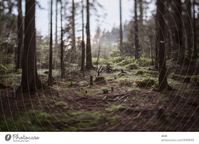 geheimniss des waldes Ferien & Urlaub & Reisen Ausflug Fahrradtour wandern Umwelt Natur Sommer Baum Moos Wald Hügel träumen authentisch dunkel einfach