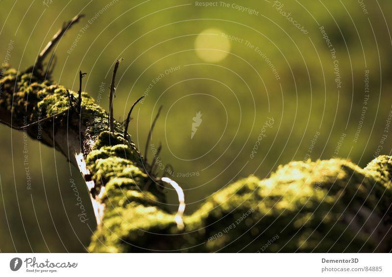 [bridge] grün Baum Herbst Wurzel Brennpunkt