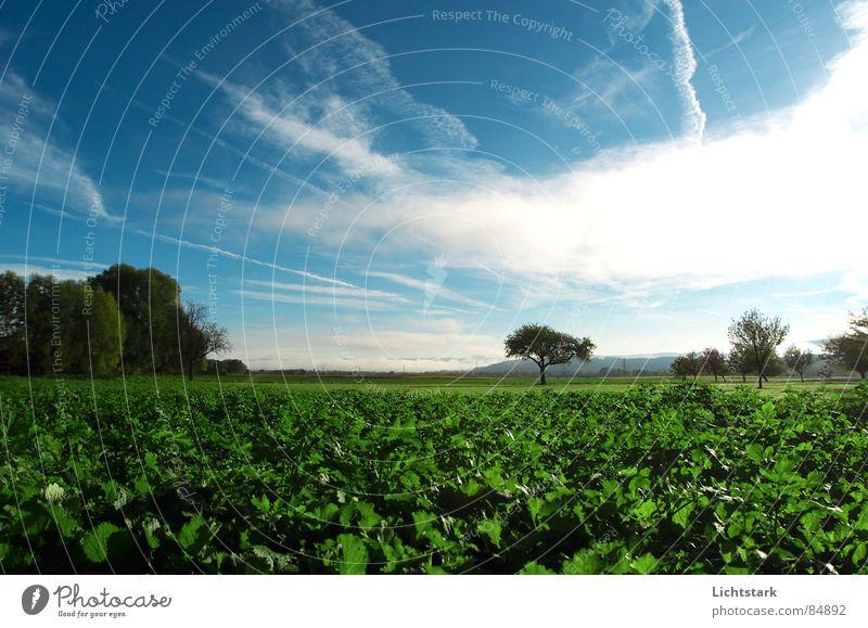 morgentau Feld Landwirtschaft Nebel ruhig bequem Ackerbau Baumstamm Himmel Baumstruktur Ernährung grun Seil Himmelszelt