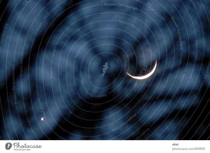 Für bit.it und Becci....Venus und ihr Mondkind Planet Himmelskörper & Weltall Nacht Sichelmond Sonnenuntergang Baumstamm Morgen Abend ruhig Baumstruktur