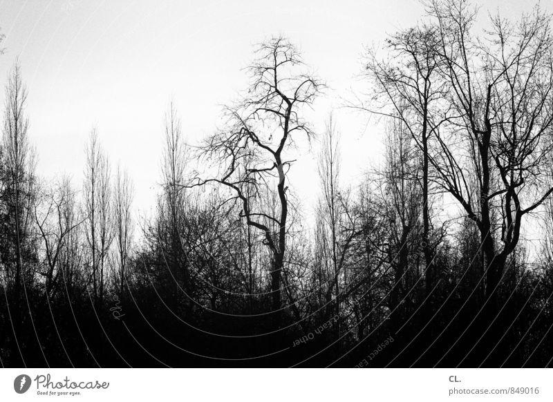 finsterworld Umwelt Natur Landschaft Urelemente Himmel Herbst Winter Klima schlechtes Wetter Baum Wald dunkel gruselig Traurigkeit Einsamkeit Angst