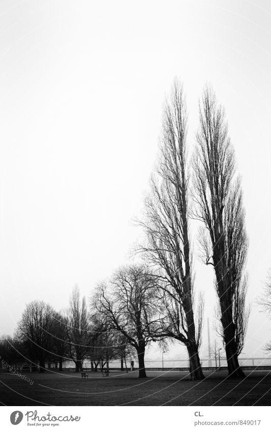 vor dem sturm Umwelt Natur Landschaft Himmel Herbst Winter Klima Baum Park Wiese trist Fernweh Rheinwiesen Düsseldorf Schwarzweißfoto Außenaufnahme Menschenleer