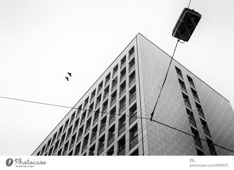 an der roten laterne Himmel Stadt Haus Gebäude Architektur Mauer Wand Fassade Fenster Tier Vogel 2 fliegen frei Zusammensein trist grau Freiheit Kabel