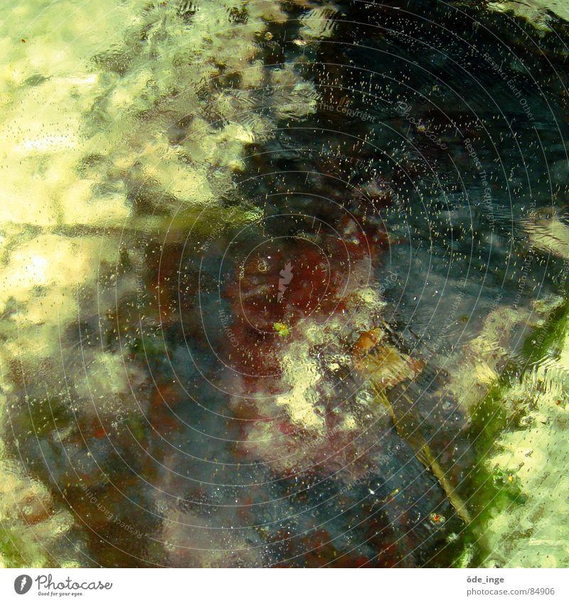 gewässer, punkt. Natur Wasser Pflanze Umwelt See Eis glänzend dreckig nass verfaulen Klarheit Flüssigkeit feucht tief Teich gießen