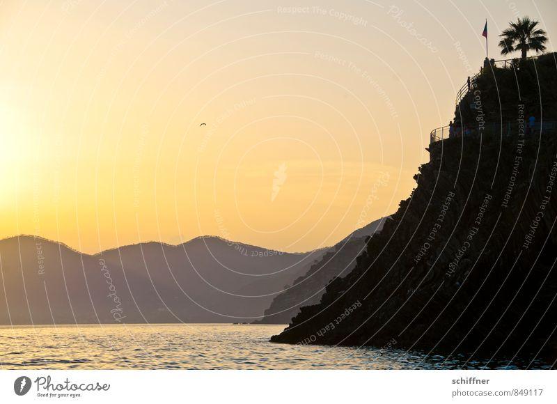 Am Ende des Tages Natur Landschaft Wasser Himmel Wolkenloser Himmel Sonne Sonnenaufgang Sonnenuntergang Sonnenlicht Klima Schönes Wetter Baum exotisch Felsen