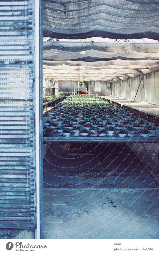 Zuchtbetrieb Pflanze grau Wachstum Topfpflanze Gewächshaus