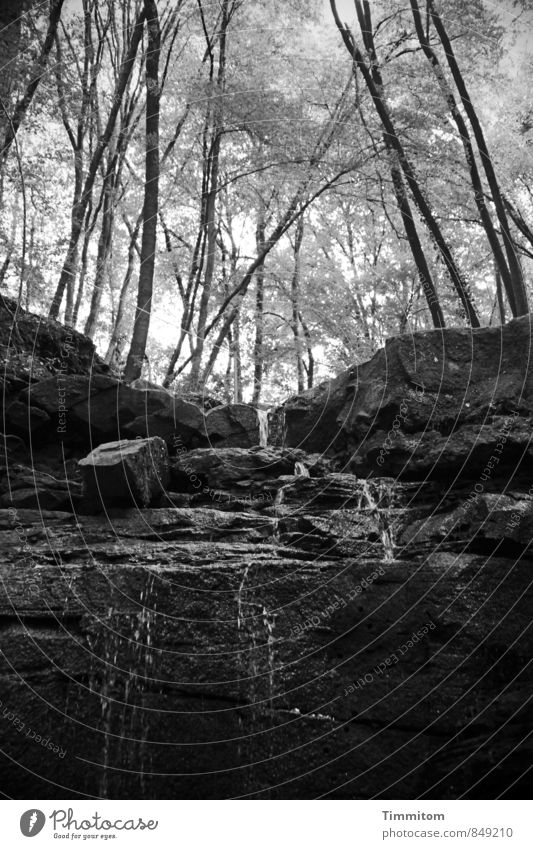 Margarethenschlucht. Umwelt Natur Landschaft Pflanze Urelemente Wasser Sommer Wetter Baum Felsen Schlucht Wasserfall Stein ästhetisch dunkel authentisch einfach