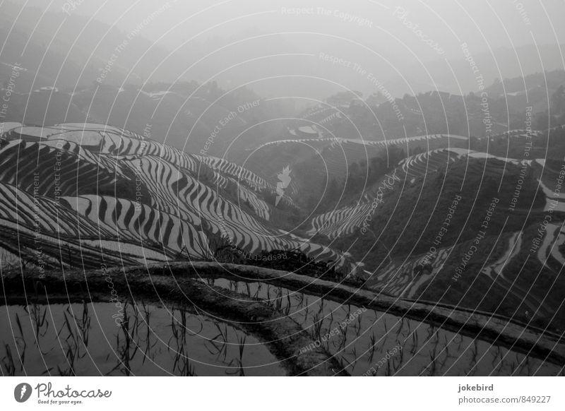 Reisterrassen Hügel Wachstum Terrassenfelder China Reisfeld Agrarprodukt Berge u. Gebirge Schwarzweißfoto Außenaufnahme Menschenleer Textfreiraum oben Tag