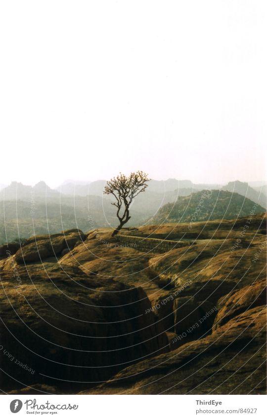 lonely tree Himmel Natur grün Pflanze rot ruhig Einsamkeit Ferne Erholung Freiheit Berge u. Gebirge Stein orange braun Niveau Klarheit