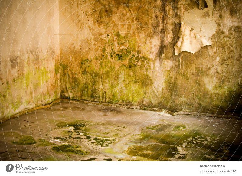 wohnst du noch... grün Wand grau Raum Industrie Häusliches Leben Ekel Schimmelpilze fade