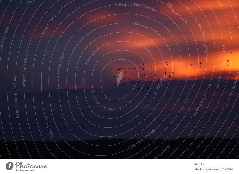 zwischen Tag und Traum Himmel Sonnenuntergang nordisch romantisch nordische Romantik abendliche Stille Abendstille Sehnsucht Fernweh ruhig Sinn Lichtstimmung