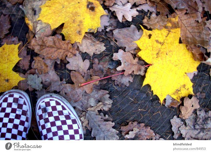 herbstwind Lieferwagen Blatt Herbst kalt Einsamkeit Trauer leer gelb Wald herzlos Eis Erde Untergrund grausam Verzweiflung Traurigkeit dreckig Bodenbelag banal