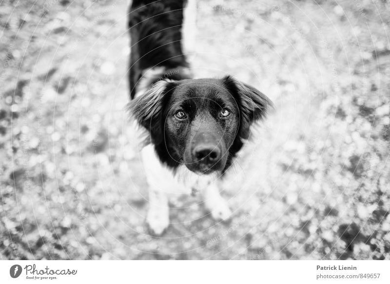 ? Wohlgefühl Zufriedenheit Sinnesorgane Erholung Ferien & Urlaub & Reisen Ausflug Ferne Strand wandern Umwelt Natur Tier Haustier Hund Tiergesicht 1 authentisch