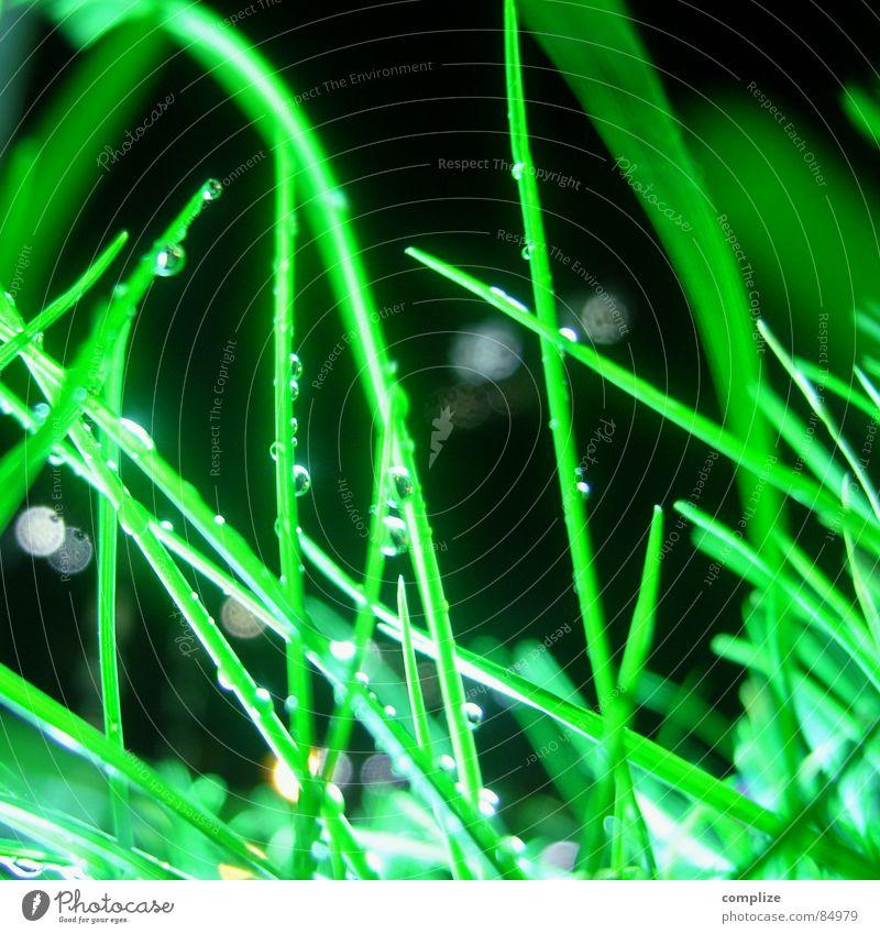 nachts nass im gras Wiese Gras grün Halm Tropfen Grünfläche feucht Flutlicht Scheinwerfer Wassertropfen Neonlicht Makroaufnahme Nahaufnahme