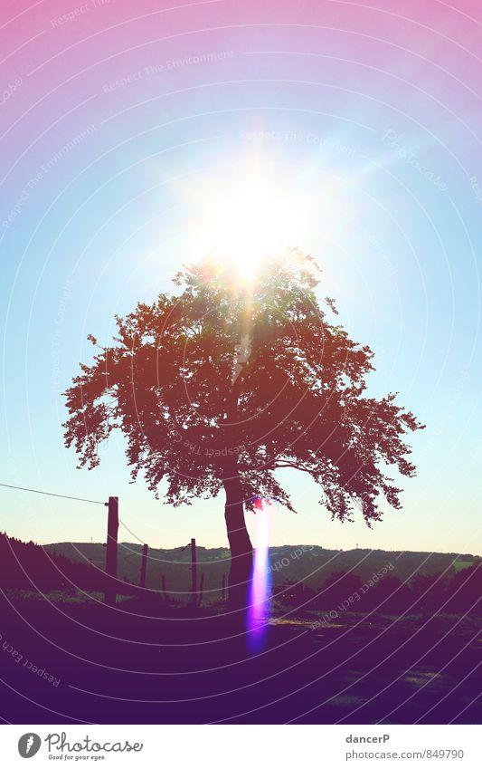 Lichterbaum Landschaft Wolkenloser Himmel Schönes Wetter Baum Freizeit & Hobby Horizont Natur blau violett rosa Farbfoto Außenaufnahme Menschenleer
