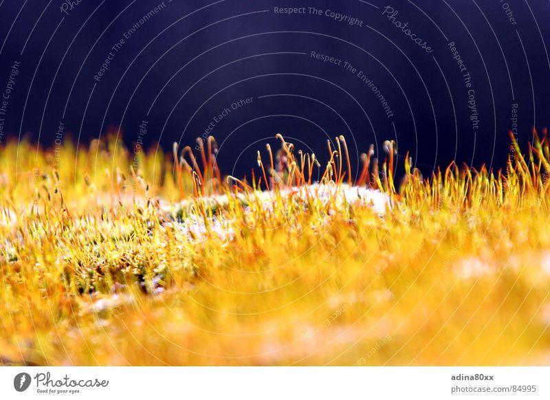 Sonnenbad grün blau Freude gelb Wiese Freiheit Wärme Wachstum Physik zart Halm Abenddämmerung zierlich Reifezeit