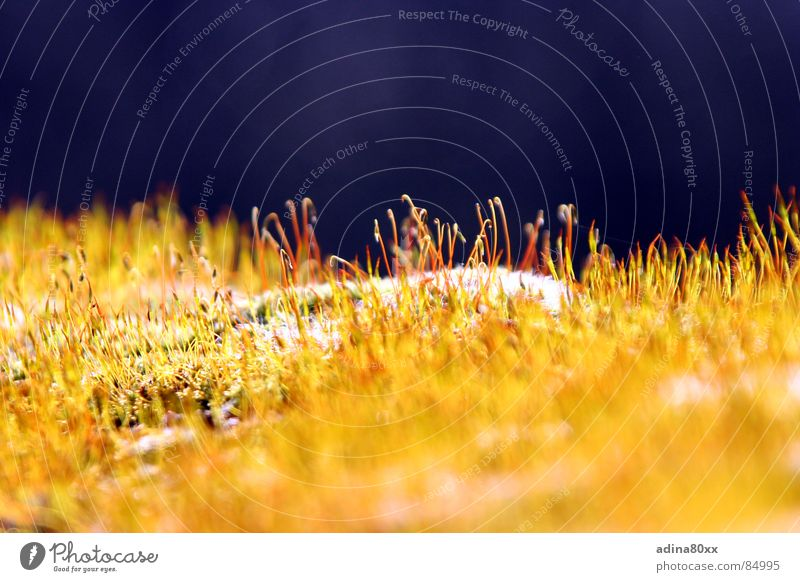 Sonnenbad Physik grün zart Reifezeit Licht gelb blau Sonnenuntergang Wachstum Halm Wiese zierlich Abend Wärme grass Freude Freiheit sonnennähe Abenddämmerung