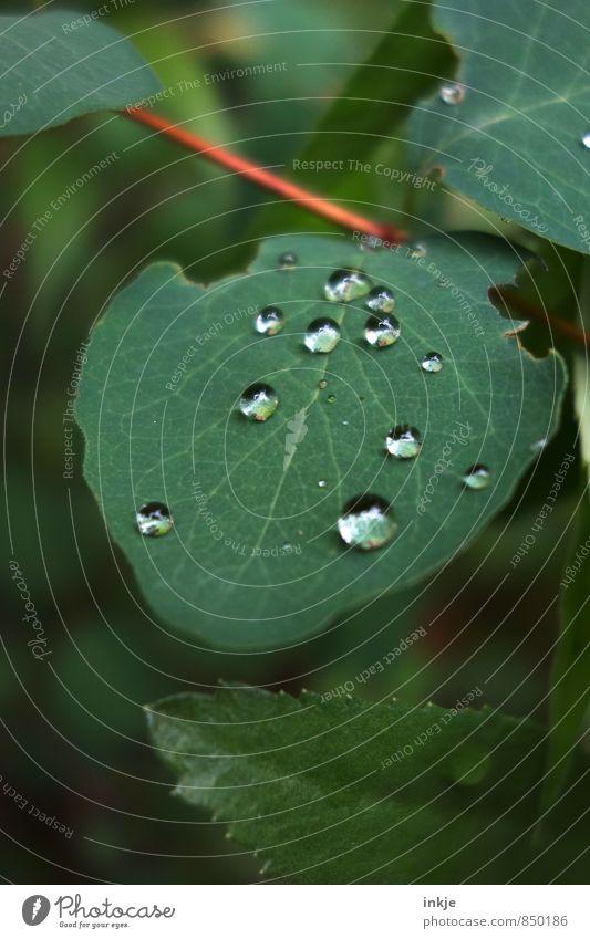 Tröpfchen Natur grün Sommer Blatt Frühling natürlich klein Garten liegen Park Regen frisch Wassertropfen nass Schönes Wetter rund