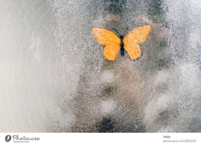 ein Schmetterling macht noch keinen Sommer Lifestyle Menschenleer 1 Tier Fensterscheibe Glasscheibe Milchglas Etikett hängen gelb Dekoration & Verzierung