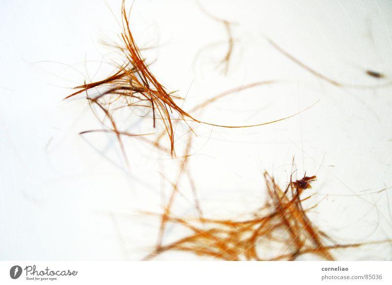 orrangiert geschnitten graphisch durcheinander chaotisch Sträucher abstrakt unordentlich orange Gänsehaut Makroaufnahme Nahaufnahme Haare & Frisuren Linie