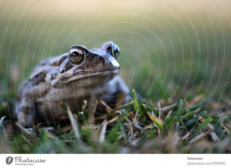 Froschperspektive Natur Ferien & Urlaub & Reisen Pflanze Sommer Tier Umwelt Wiese Gras natürlich Garten Park Wildtier nass beobachten nah Tiergesicht