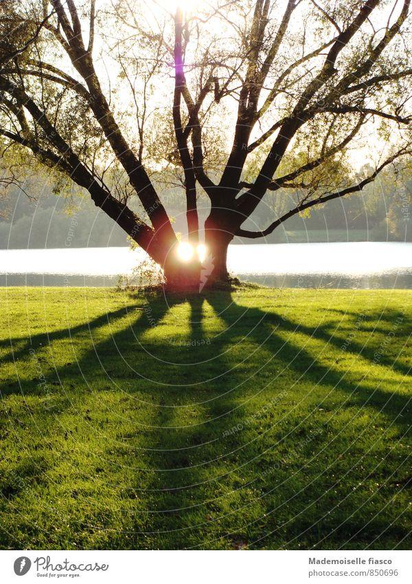 Baum am See mit Sonnenspiegelung zwischen den Ästen Reflexion & Spiegelung Umwelt Natur Landschaft Gras Park groß grau grün schwarz ruhig Erholung Ewigkeit