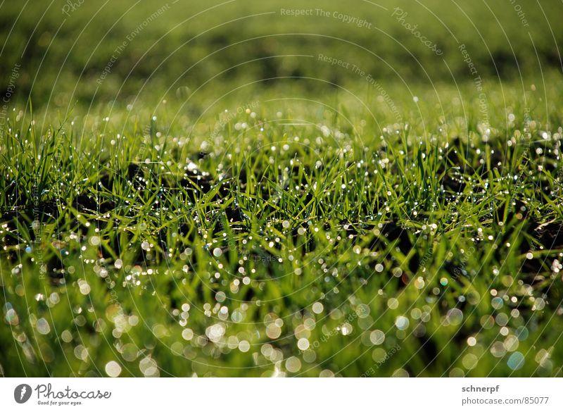 Feld nach Regen Natur grün Wiese Gras Frühling nass Seil Erde frisch Rasen Sportrasen Hügel feucht Weide