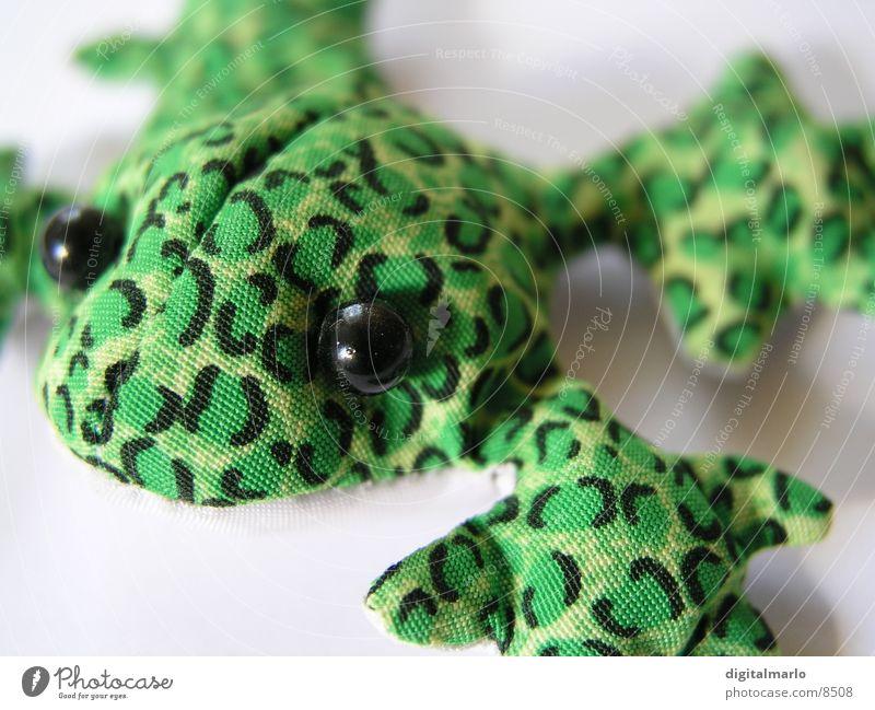 froggi Stoff Tier grün klein Frosch Makroaufnahme