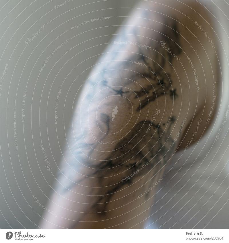 Lebenszeichen Körperkunst Tattoo Mensch feminin androgyn Junge Frau Jugendliche Haut Arme 1 18-30 Jahre Erwachsene Stern T-Shirt Tier Bulle Tierkreiszeichen